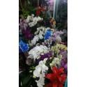 orkideler