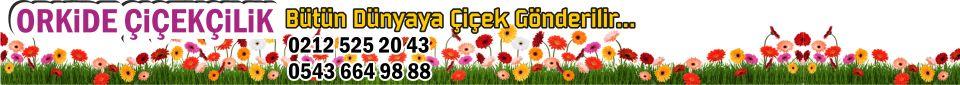 Orkide Çiçekçilik İstanbul Fatih